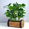 Artificial Plants And Foliage